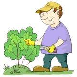 Le jardinier coupe un buisson illustration de vecteur