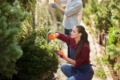 Le jardinier de fille habillé dans le tablier est des usines d'élagage dans le beau crèche-jardin un jour ensoleillé photo libre de droits