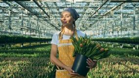 Le jardinier de sourire avec des tulipes marche à l'intérieur d'une serre chaude banque de vidéos