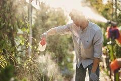Le jardinier de type pulvérise l'engrais sur des usines dans le beau crèche-jardin un jour ensoleillé Travail dans le jardinier photo libre de droits
