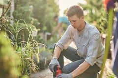 Le jardinier de type pulvérise l'engrais sur des usines dans le beau crèche-jardin un jour ensoleillé Travail dans le jardinier image libre de droits