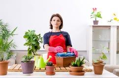 Le jardinier féminin avec des usines à l'intérieur photo libre de droits