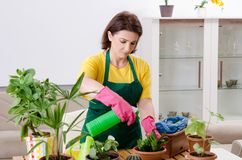 Le jardinier féminin avec des usines à l'intérieur images libres de droits