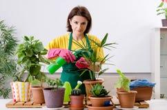 Le jardinier féminin avec des usines à l'intérieur photographie stock libre de droits