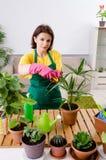 Le jardinier féminin avec des usines à l'intérieur photos stock