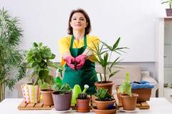 Le jardinier féminin avec des usines à l'intérieur photo stock