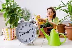 Le jardinier féminin avec des usines à l'intérieur images stock