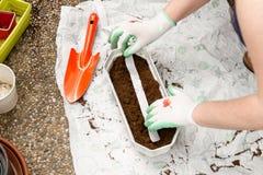 Le jardinier féminin plante des bandes de graine de plantswith images stock