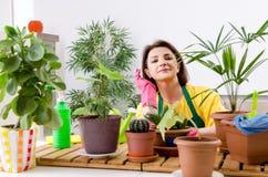 Le jardinier f?minin avec des usines ? l'int?rieur photographie stock libre de droits