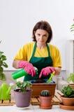 Le jardinier f?minin avec des usines ? l'int?rieur image stock