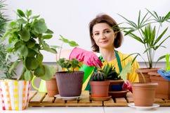 Le jardinier f?minin avec des usines ? l'int?rieur images libres de droits