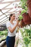 Le jardinier f?minin inspectant des fleurs cultivent ? l'int?rieur de la serre chaude image libre de droits