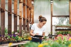 Le jardinier f?minin inspectant des fleurs cultivent ? l'int?rieur de la serre chaude photos libres de droits