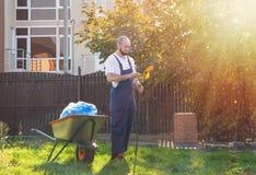 Le jardinier nettoie le râteau des feuilles Jardinage et nettoyage de yard Le soleil brille brillamment du côté droit photos stock