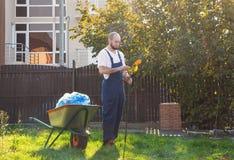 Le jardinier nettoie le r?teau des feuilles Jardinage et nettoyage de yard images libres de droits