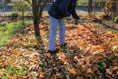 Le jardinier ratisse vers le haut d'une pile des feuilles d'automne tombées dans le jardin images libres de droits