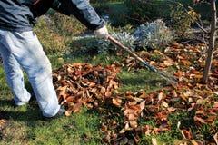 Le jardinier ratisse vers le haut d'une pile des feuilles d'automne tombées dans le jardin photo libre de droits