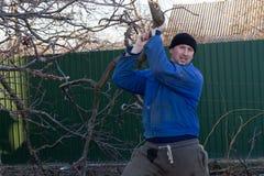 Le jardinier soulève une grande branche d'un arbre Photos libres de droits