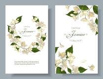Le jasmin fleurit des bannières Image stock