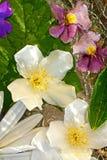 Le jasmin fleurit le fond Photographie stock