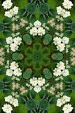 Le jasmin fleurit le fond de kaléidoscope Photo libre de droits
