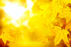 Le jaune abstrait d'automne laisse le fond de nature Image stock