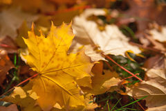 Le jaune d'automne laisse le fond Images stock