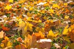 Le jaune d'automne laisse le fond Photos libres de droits