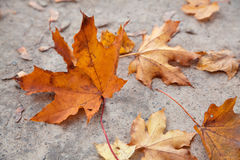 Le jaune d'automne laisse le fond Photographie stock