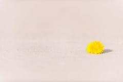 Le jaune est une route isolée photographie stock