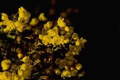 Le jaune fleurit #2 Images stock