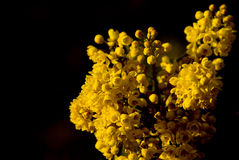 Le jaune fleurit #4 Image libre de droits