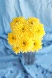 Le jaune fleurit des hrysanthemums dans un vase sur un fond bleu photos stock