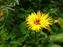 Le jaune fleurit la lumière du jour Photographie stock