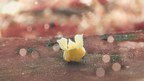 Le jaune fleurit la tache floue de bokeh de fond Photos libres de droits