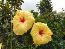 Le jaune fleurit le jardin exotique Photographie stock libre de droits