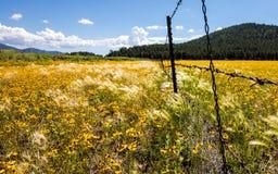 Le jaune fleurit près de la hampe de drapeaux Image libre de droits