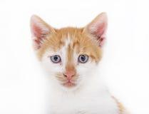Le jaune kittten photographie stock libre de droits
