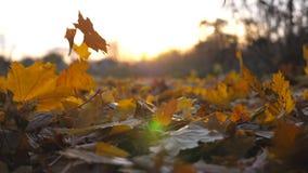 Le jaune laisse la chute à la terre dans le parc d'automne et au soleil brillant par lui automne coloré Beau paysage clips vidéos