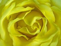 Le jaune a monté Photo stock
