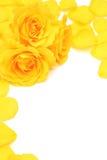 Le jaune a monté Photo libre de droits