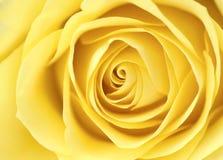 Le jaune a monté Photos libres de droits