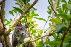 Le jaune observe le chat sur un arbre photographie stock