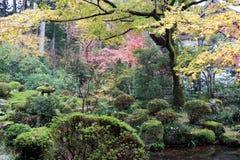 Le jaune orange rouge et la feuille japonaise verte sur la branche de l'arbre pendant l'automne font du jardinage Photo libre de droits