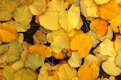 Le jaune part dans un parc à Florence - paysage d'automne en Toscane Images stock