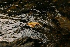 Le jaune part sur la surface d'une rivière de montagne image libre de droits