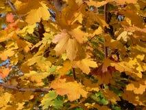 Le jaune quitte la forêt Images libres de droits