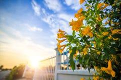 Le jaune s'abaisse près de la barrière et du coucher du soleil avec le nuage photo stock