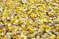 Le jaune tombé laisse le fond Photo stock