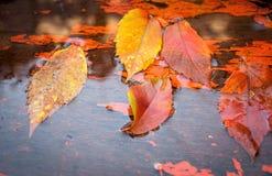 Le jaune tombé part sur l'eau en automne Photo stock
